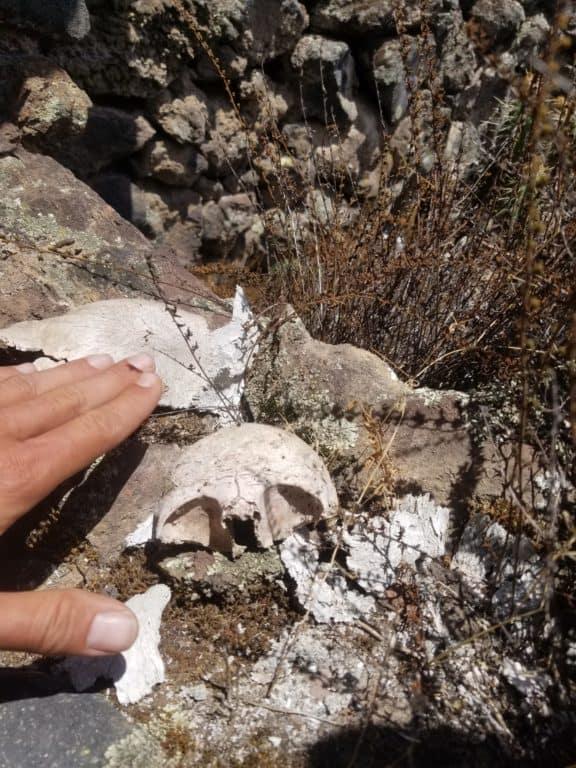 crâne d'enfant retrouvé dans la citadelle d'Antaymarca