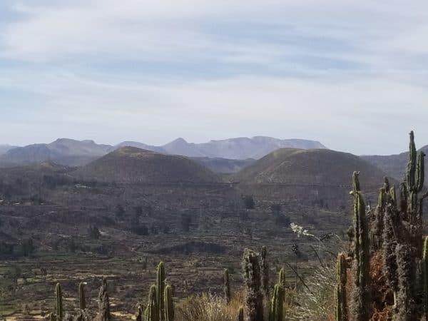 Histoires de lézards à deux queues au Pérou