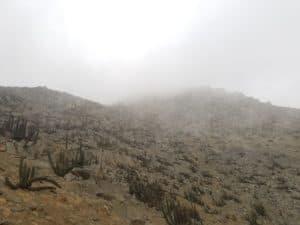 Cerro Mangón sommet dans la brume