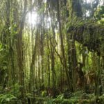 Chachapoyas forêt du tigre