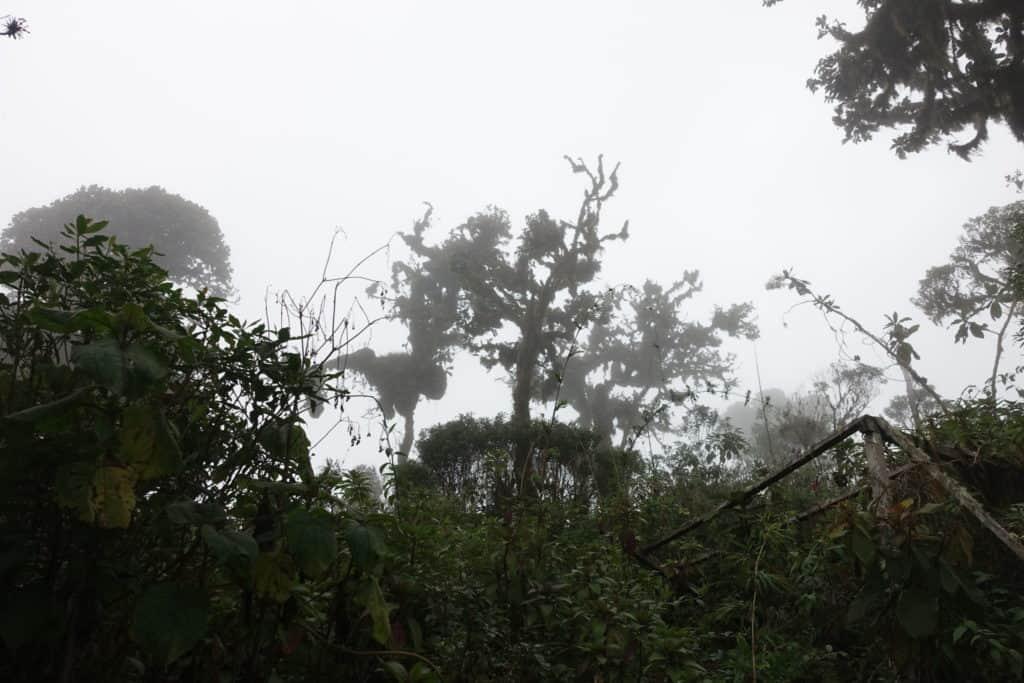 Huanacaure forêt embrumée