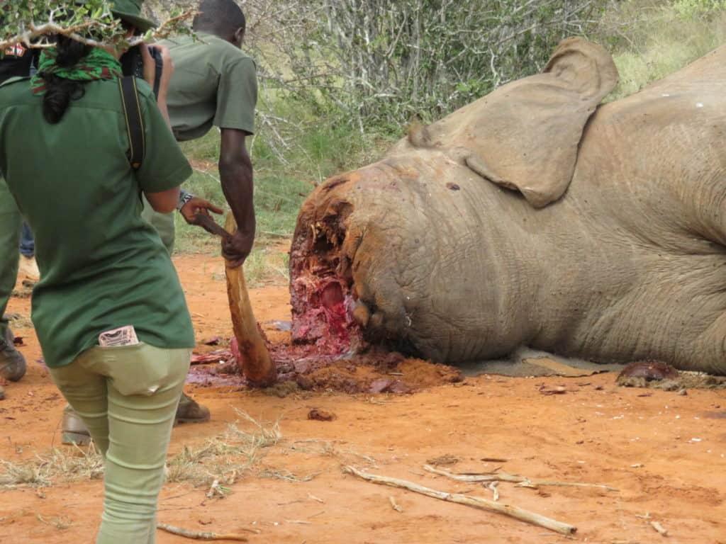 Elephant braconné dans le parc de Tsavo, Kenya